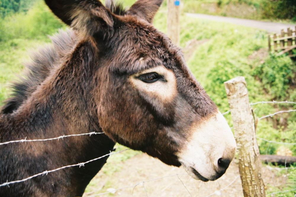 Ein Esel steht an einem Zaun.