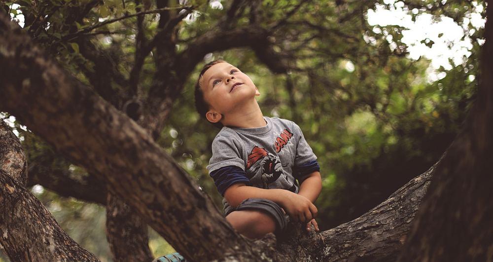 Ein kleiner junge sitzt in einem Baum und freut sich.